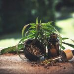 3 Smoothies To Prepare At Home With CBD Oil